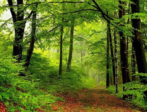 《看不见的森林》读后感
