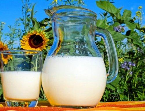 """""""放生牛奶""""——造福还是造孽?"""